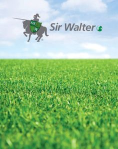 #SirWalterLawnTurf  Daleys Turf is the leading producer of Australia's favourite lawn 'Sir Walter' on the Sunshine Coast, Queensland. 'Sir Walter' has now become the most sought after grass on the coast and it is because of it's excellent suitability to our coastal environment.  Read more http://www.daleysturf.com.au/sir-walter.html