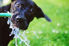 Twenty health tips you can learn from your pets.