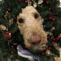 Wreath Poodle face
