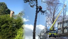 Baumfaellung ZK – Baumdienst, Baumpflege & mehr Faellen, Schneiden & Kuerzen mit verschiedenen Techniken in jeder Hoehe.