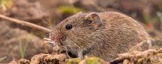 Nature Today | Luzerne langs faunarand voor én tegen muizen