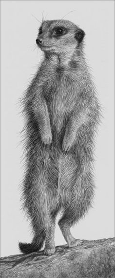 Julie Rhodes, amazing original wildlife pencil art