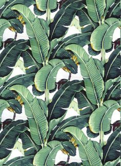 Beverly Hills Hotel Martinique Wallpaper/The Original / Palm