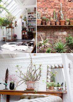 brick walls, cactus on shelves, windows, cowhide rug, white brick walls...love it all.