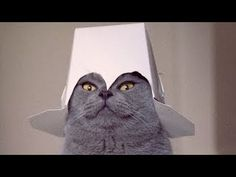 Funny Cats Video, Funny Cat Videos Ever- Funny Videos 2014, Funny Animals Funny Animal Videos cats  https://www.youtube.com/watch?v=AGftm1bxZl8