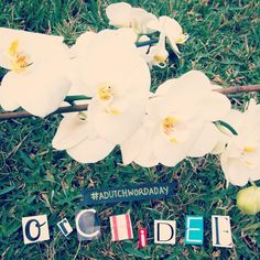 #adutchwordaday {day 319} Orchidee  - Orchid adutchwordaday.tumblr.com