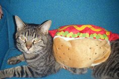 Pin for Later: Your Comprehensive Guide to Dog and Cat Halloween Costumes Hot Dog