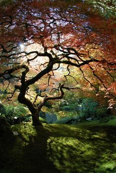 Amazing photo of curling tree with bright colors - Beautiful nature images, photos and pictures of trees and forests, landscape photographs. Awesome nature photography that takes your breath away. Beautiful World, Beautiful Places, Beautiful Beautiful, Beautiful Scenery, Absolutely Gorgeous, Portland Japanese Garden, Japanese Gardens, All Nature, Pics Of Nature