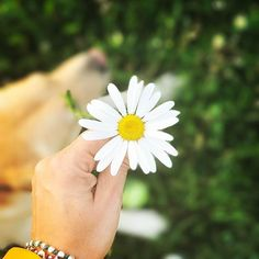 Chi non riesce a fare luce è pregato di non fare ombra. Grazie  #flowers#flowerpower#positivevibes#positive#happiness#colours#dog#margherita#daisy#me#nature#love#tbt#photography#photooftheday#goodmorning#goodvibesonly#picoftheday#pic http://blog.fmcarsrl.com/wp-content/uploads/2017/05/18445002_1369195659836712_4501641113693585408_n.jpg http://blog.fmcarsrl.com/index.php/2017/05/16/chi-non-riesce-a-fare-luce-e-pregato-di-non-fare-ombra-grazie-flowersflowerpowerpositivevibespo