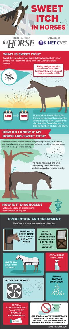 ♥ Horse Stuff ♥  Infographic: Sweet Itch in Horses