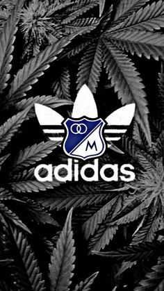 Adidas mata millonarios sin Darwin, Adidas Logo, Adidas Originals, Champion, Samsung, Entertainment, My Favorite Things, Logos, Men's T Shirts