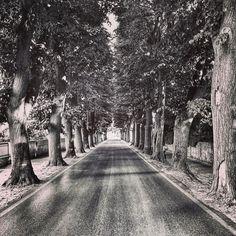 On the road. . . . . . . . . . . #igerspisa #bnw_pisa #vicopisano #visit_vicopisano #vialediaz #trees