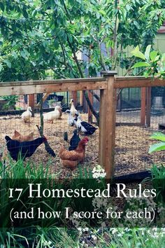 17 Homestead Rules and How I Score For Each   Northwest Edible Life