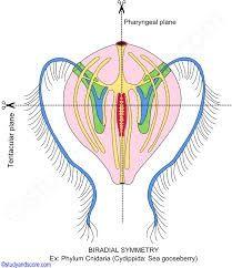 First Plane, Ernst Haeckel, By Plane, Body Organs, Floating In Water, Tentacle, Mirror Image, Dream Catcher, Algebra