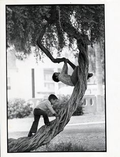 This image of two boys climbing a tree made its way into the personal papers of Julian Nava, along with several other photographs depicting children playing. Julian Nava Collection.