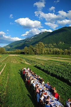 Outstanding in the Field: A farm to table traveling experience. Photos Courtesy of Outstanding in the Field.