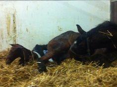 First foal at Keystud!