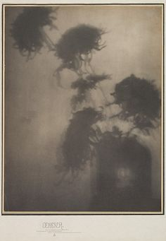 "The Shadows on the Wall. ""Chrysanthemums""     Adolf de Meyer  (American (born France), Paris 1868–1949 Los Angeles, California)  Source: venusmilk"
