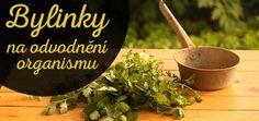 bylinky-na-odvodneni-tn Nordic Interior, Healing Herbs, Detox, Korn, Edm, Health Fitness, Healthy, Medicine, Anatomy
