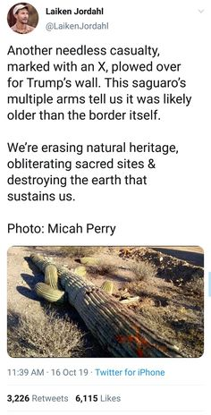 That's illegal! It's illegal to remove Saguaros in Arizona at least and I assume other states as well Was Ist Pinterest, Pro Choice, The More You Know, Faith In Humanity, Save The Planet, Social Issues, Worlds Of Fun, Social Justice, Change The World