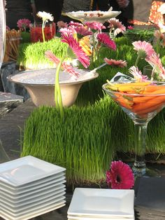 Wheatgrass Crudite Display
