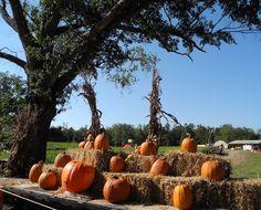 Yes, we have pumpkins!