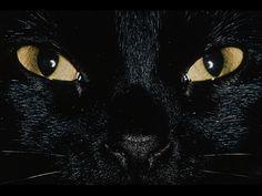 Black Cat Wallpaper HD yellow eyes Wallpaper