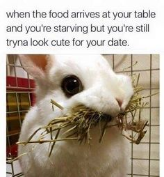 When the food arrives at your table and you're starving but you're still tryna look cute for your date (Funny Animal Pictures) - #cute #date #dating #starve