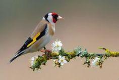 HD Colorful Bird On Flowering Branch Wallpaper