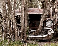 1957 Chevy Bel Air with a Tree growing out of the front grill Photograph on Etsy, $15.00