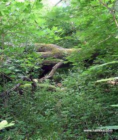 Viurilanlahteen rajoittuva Vaisakon luonnonsuojelualue Halikonlahden länsirannalla