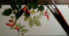 Rosehips Watercolor, Tableware, Art, Pen And Wash, Art Background, Watercolor Painting, Dinnerware, Tablewares, Kunst