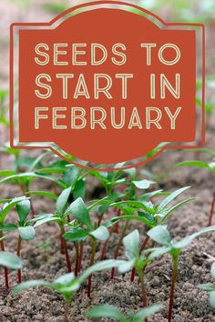 It's prime time to start your organic garden. Despite it being cold, there, there's many seeds that can be started in February. Grow seedlings now indoors, then transplant to your organic garden in warmer weather.