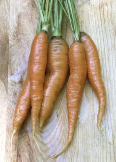 How to Grow Carrots - Vegetable Gardener