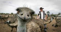 Risultati immagini per foto animali nel mondo