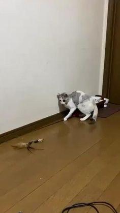 Cute Little Animals, Cute Funny Animals, Cute Dogs, Funny Animal Memes, Funny Animal Pictures, Funny Cats, Animal Jokes, Cute Animal Videos, Crazy Cats