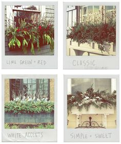 Winter Window Box Ideas — Deuce Cities Henhouse