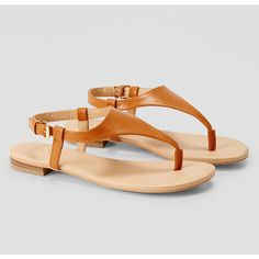 LOFT Thong Sandals ($30) ❤ liked on Polyvore featuring shoes, sandals, brown, brown sandals, toe post sandals, brown shoes, loft shoes and toe thongs