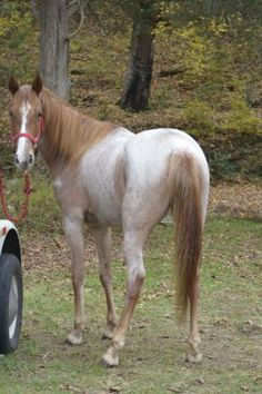 Camelot auction, NJ Feedlot Horse Rescue AVAILABLE ...