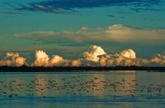 """Parco Delta del Po  """"L'acqua ha determinato l'origine di splendidi ambienti naturali. E dall'acqua, accanto all'acqua, si sono sviluppate nei secoli tutte le attività dell'uomo legate alla pesca, all'agricoltura, alla tradizione, alla cultura, all'arte."""""""