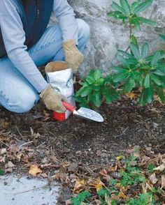 ns: plantas, flores e jardinagem Plantas e Jardi