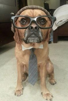 I have been loving puggles since before they were cool.