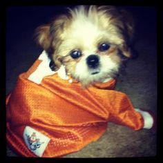 The cutest fans cheer for UT! #hookem #longhorns #puppy #pets