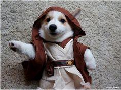 Stumphrey: The World's Cutest Jedi