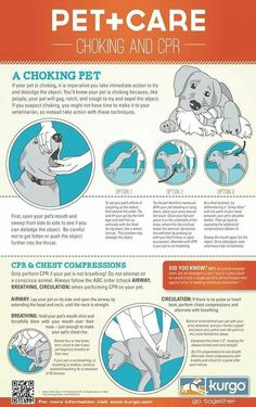 Pet Care - Choking and CPR