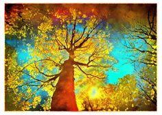 Night sky, 8x10, Art, photography, nature, Fine Art photograph, Fall decor, tree art, red decor, autumn decor, color photography on Etsy, $39.00