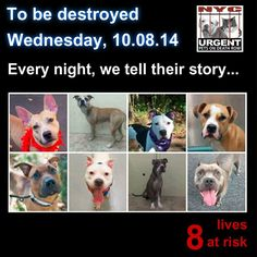 TTO BE DESTROYED: 13 Dogs to be euthanized by NYC ACC- WED. 10/08/14. This is a HIGH KILL shelter group. YOU may be the only hope for these pups! ****PLEASE SHARE EVERYWHERE!!!o rescue a Death Row Dog, Please read this:  http://urgentpetsondeathrow.org/must-read/    To view the full album, please click here:    https://www.facebook.com/media/set/?set=a.611290788883804.1073741851.152876678058553&type=3