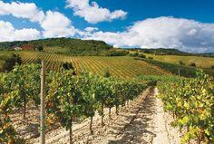 vineyard @ Locanda Palazzone, Orvieto (Umbria), Italy