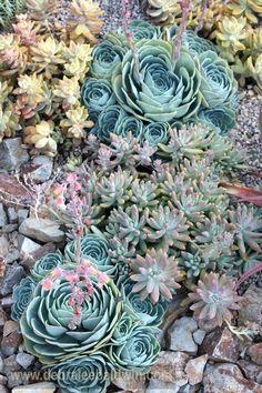 Succulent garden vignettes - eclectic - landscape - san diego - Debra Lee Baldwin