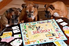 #dogs #boxers